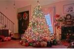 Vì sao cây thông là biểu tượng của Giáng sinh?