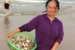 Vớt cá chết ở Vũng Áng thu tiền triệu; ai muốn xây sân bay 8.000 tỷ đồng ở tỉnh nghèo?