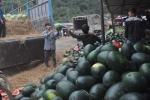 Những kịch bản thu mua nông sản của thương lái Trung Quốc