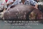 Thủy quái sông Mê Kông đã về đến Hà Nội