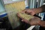 Tin gạo nhựa giả lan tràn ở Malaysia là bịa đặt