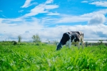 Vinamilk tiên phong nâng cao chất lượng ngành sữa với trang trại organic đầu tiên tại Việt Nam