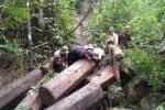 Lâm tặc chụp ảnh 'tự sướng', rao bán gỗ lậu trên... Facebook