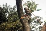Kỷ luật cán bộ trả lời báo chí vụ chặt cây: Lãnh đạo Đại học Lâm Nghiệp lên tiếng