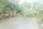 Mưa đá ồ ạt tấn công Lào Cai, gió lốc quật ngã cây cối gây tê liệt giao thông