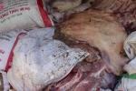 Gần 5 tấn thịt heo chết, nổi hạch bán cho người nghèo