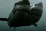 Video về 'thủy quái' 2 đầu đầu tiên trên thế giới