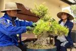 Bằng Kiều khoe ảnh cùng bạn gái Hoa hậu chăm sóc vườn bonsai tiền tỷ ở Mỹ