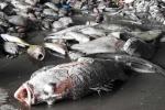 Toàn văn thông báo của Chính phủ về cá chết hàng loạt ở miền Trung