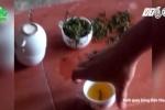 Rùng mình công nghệ trộn mì chính tạo độ ngọt cho chè búp Thái Nguyên