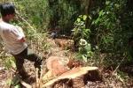 Cải trang người câu cá, công nhân truy bắt nhóm lâm tặc sừng sỏ