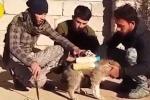 Khủng bố IS bắt chó cõng bom cảm tử gây sốc