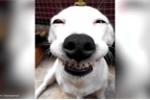 Nụ cười của chú chó này sẽ 'cứu rỗi' cả một ngày u ám của bạn