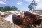 Công ty chôn chất thải trái phép ở Đà Nẵng bị phạt 2 tỷ đồng