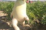 Clip: Củ cải trắng khổng lồ nặng hơn 5kg, to gần bằng em bé ở Lâm Đồng