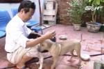 Kinh nghiệm chọn chó khôn giữ nhà