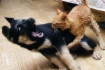 Chó hùng hổ lao vào hù dọa bị mèo đuổi chạy 'bán sống bán chết'