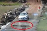 Tài xế ôtô nín thở chờ cá sấu khổng lồ uể oải lê bước sang đường