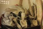 Ảnh: 2 bộ xương cá voi 'khủng' nhất Việt Nam ở Quảng Bình