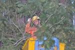 Điện lực Hà Nội khuyến cáo người dân mùa mưa bão