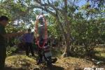 Nam thanh niên treo cổ tự tử tại vườn điều gần nhà