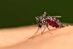 Nghiên cứu mới: Căng thẳng khiến muỗi... dễ chết hơn