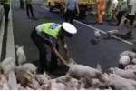 Lật xe tải chở lợn, hàng trăm lợn con 'đại náo' đường hầm