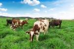 Trang trại bò sữa Organic tiêu chuẩn Châu Âu đầu tiên tại việt nam của Vinamilk