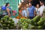 Bí thư Thăng điện cho Chủ tịch Hà Giang hỏi giá bán cam tại vườn