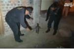 Clip: Lang thang trên phố, chim cánh cụt bị cảnh sát 'bắt giữ'