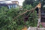 Bão số 1 sắp đổ bộ vào đất liền: Thái Bình gió giật cấp 10, cây đổ la liệt