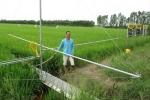 Xuồng nhôm phun thuốc bảo vệ ruộng lúa của 'nhà khoa học' nông dân