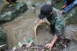 Video: Kỳ thú theo chân người dân Tây Nguyên săn nòng nọc