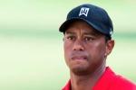 Tiger Woods sẽ không tham dự giải Safeway Open 2016