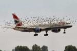 Xin cấp hơn 1.000 tỷ đồng để... đuổi chim ở sân bay Nội Bài, Tân Sơn Nhất