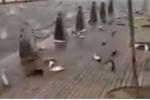 Giả thiết bất ngờ sau vụ tự tử tập thể của đàn cá ở Trung Quốc