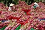 Vì sao thương lái Việt nỡ hại nông dân Việt?