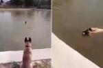 Chó cưng dũng cảm nhảy xuống hồ cứu chủ bị đuối nước