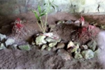 Kỳ bí 3 ngôi mộ cổ chôn người bị trói trong đại ngàn Cúc Phương