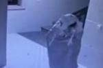 Video: Tên trộm kì quái giả làm ma khi phát hiện camera an ninh