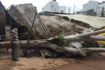 TP.HCM: Cây đổ sập đè nhà dân, quật trúng người đi đường