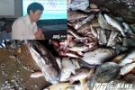 Đánh giá môi trường biển miền Trung: Chuyên gia quốc tế nói gì?