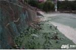 Video: Kinh hãi nhìn hồ Văn Quán ô nhiễm nặng nề, bốc mùi nồng nặc