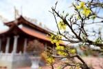 Nhà thờ Tổ của Hoài Linh được trang hoàng kỹ lưỡng để đón Tết Đinh Dậu