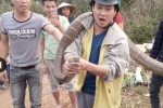 Video: Bắt sống rắn hổ mang chúa hoang dã khổng lồ ở Phú Thọ