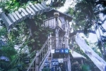 Kỳ lạ nữ dị nhân 25 năm sống trên cây