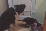 Video: Chó lịch sự 'xin phép' mèo để được ăn gây sốt cộng đồng mạng