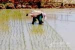 Nông dân Nghệ An 'ngày mang tơi, đêm đội đèn' tránh nắng nóng