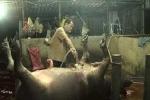 'Đột nhập' lò mổ, xem cảnh bơm nước vào thịt trâu bò