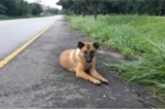 Câu chuyện cảm động về chú chó ngồi vệ đường 12 tháng đợi chủ